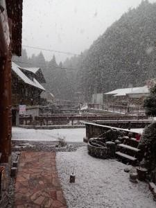 雪20170124 (2)